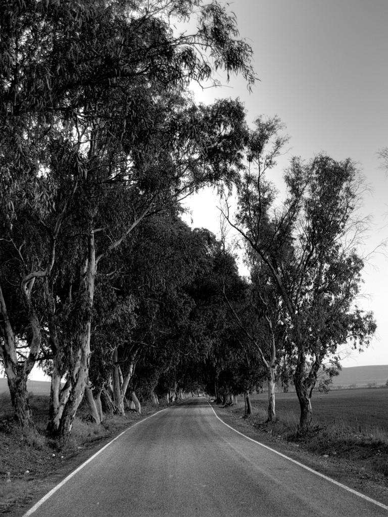 Caminos (III)   /   Ways (III)