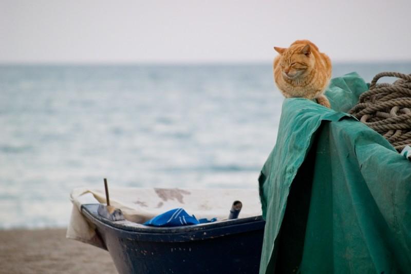 El gato marinero   /   The sailor cat
