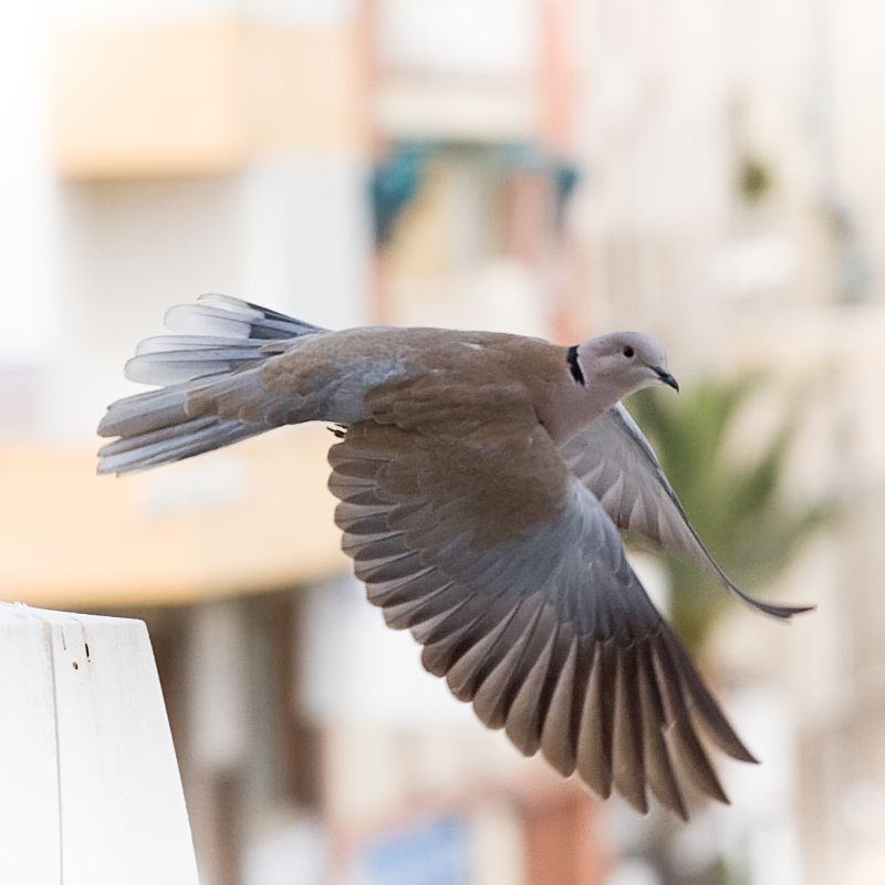fly lil bird, fly