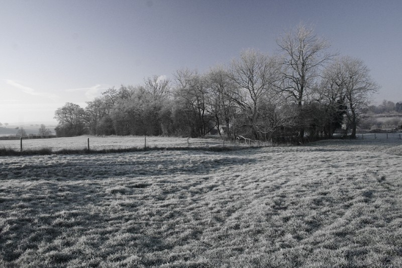 Cold and frosty morning 2