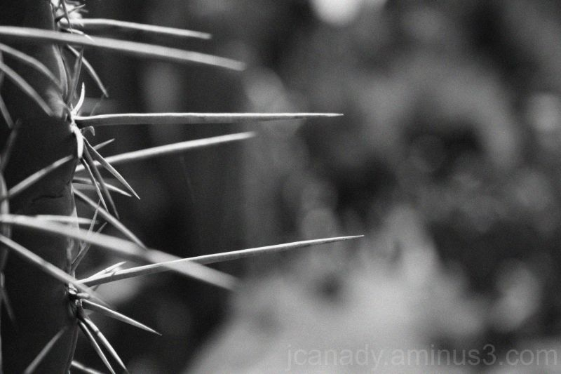 cactus in benalmádena