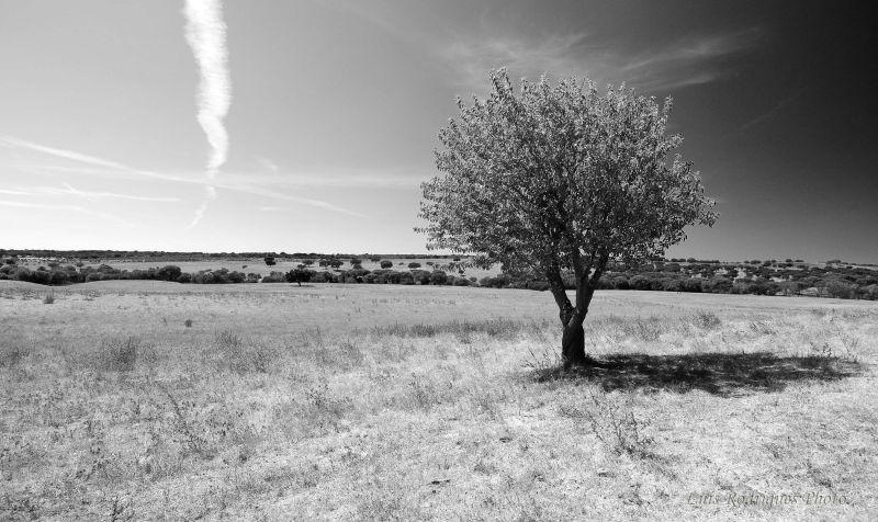 Alentejo Portugal Planicie Arvore
