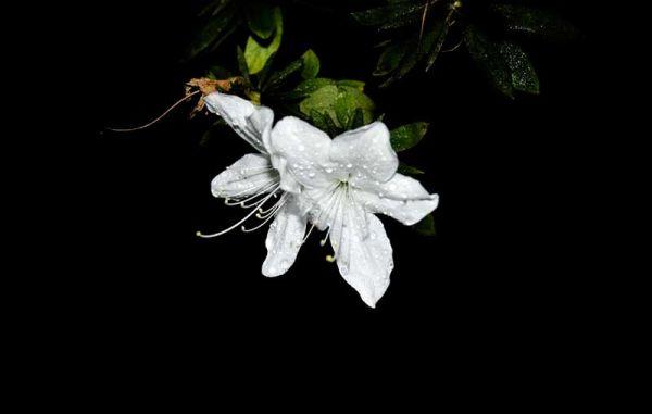 madeira, portugal, Island, ilha, flower