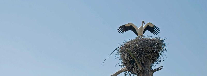 Storke,portugal