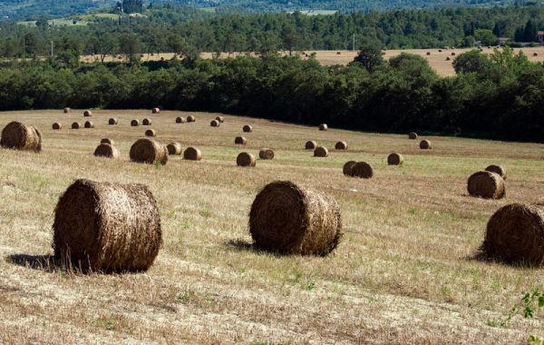 Toscana Italy Fields