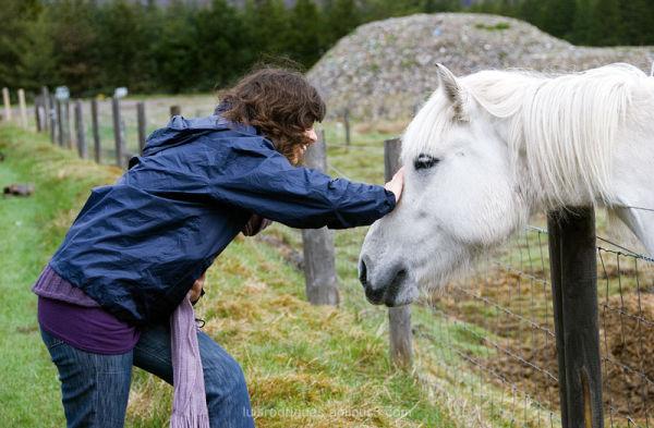 Scotland Horse Field