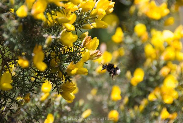 scotland isle of skye bee
