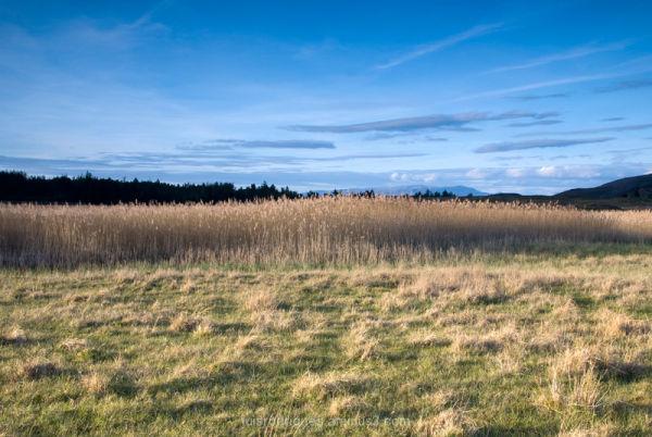 Scotland Fields