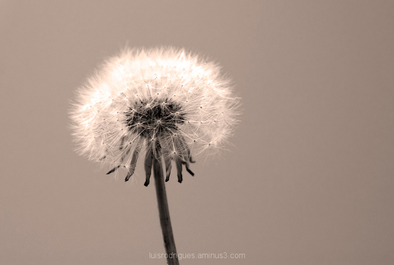 Nature Plant Wind