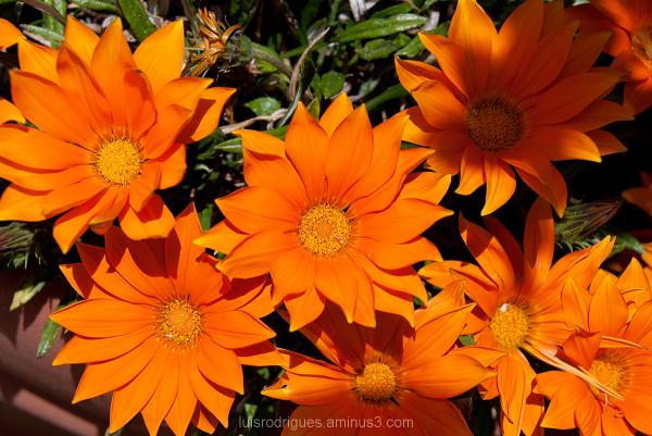 Orange Flower Nature