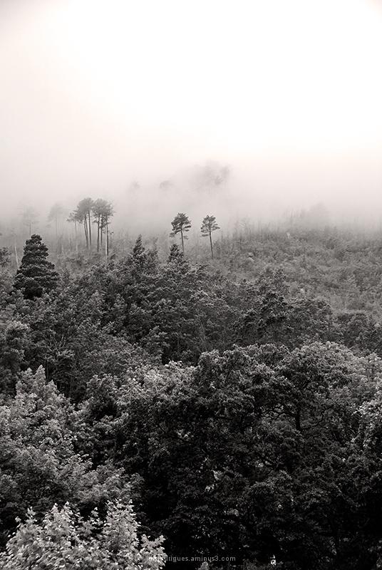 Portugal Geres Nature Fog