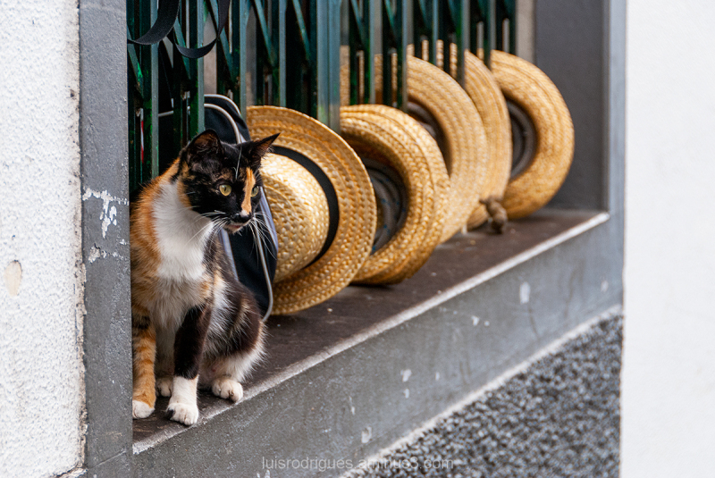 The Cat and is Hats