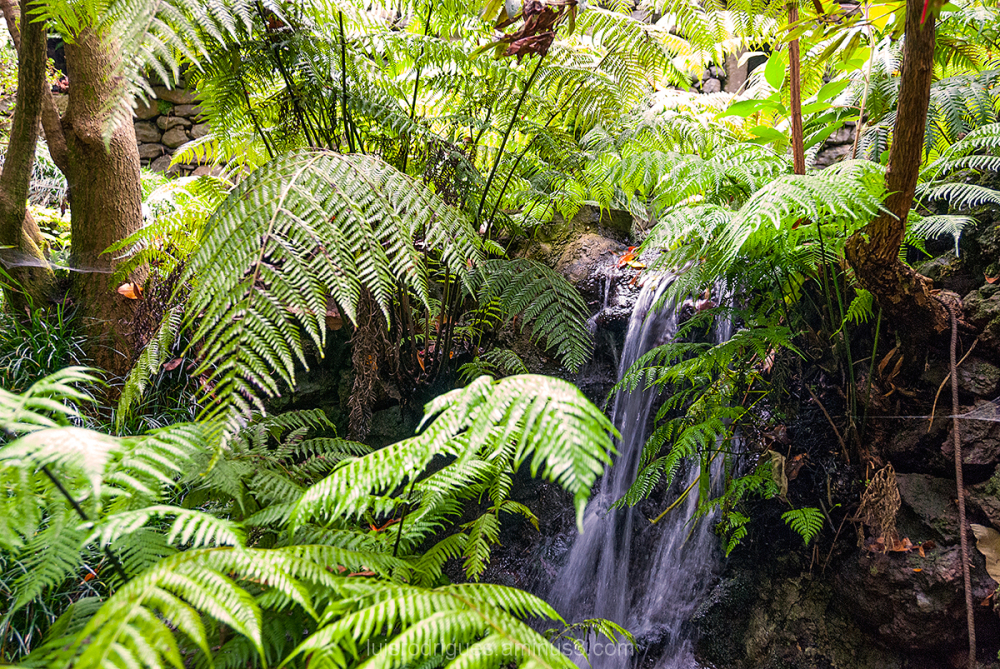 Madeira Island Portugal Funchal Tropical Garden