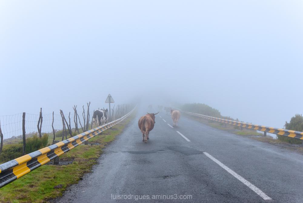 Fog Island Madeira