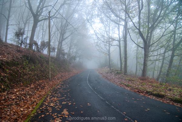 Laurisilva Forest Madeira