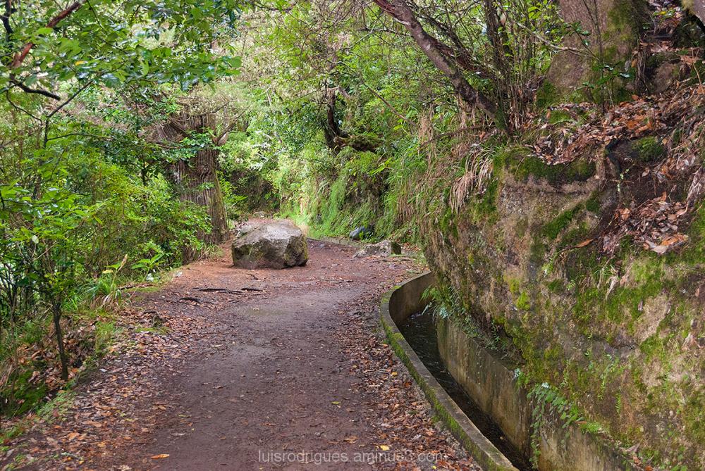 Madeira Paths