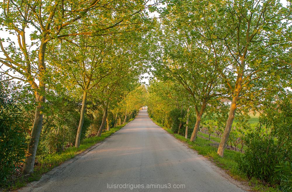 Green Path Montado Golf Resort Portugal
