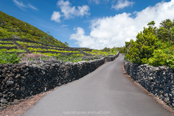 Pico Island Azores Portugal vineyard
