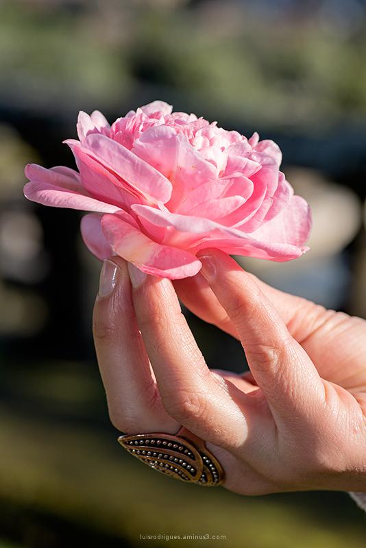 Flower Hand