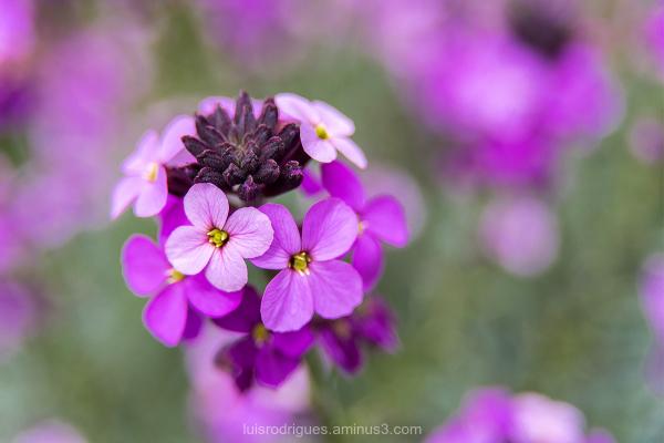 London Gardens Flowers