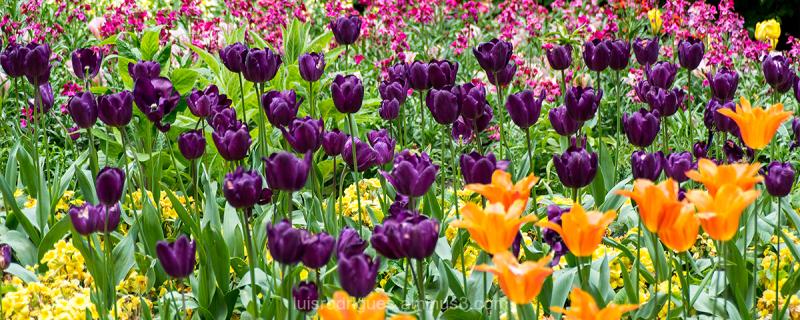 London Gardens Colors