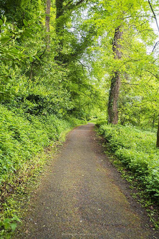 Cahir Forest