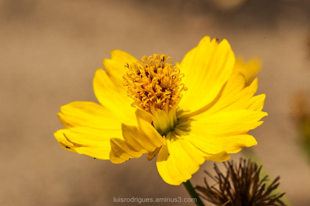Yellow September