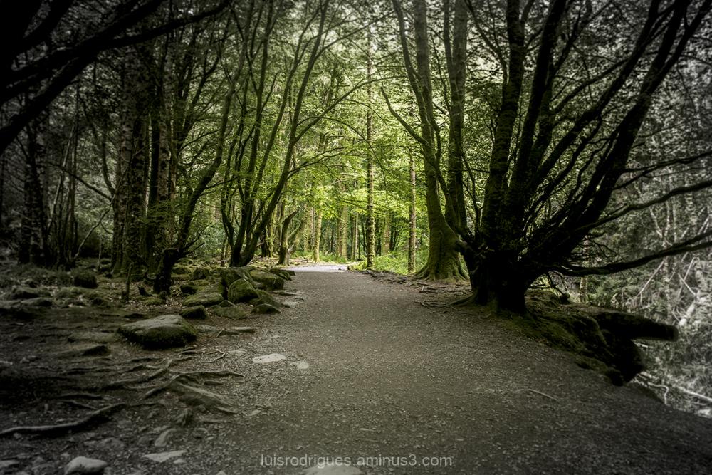 Brackloon Wood