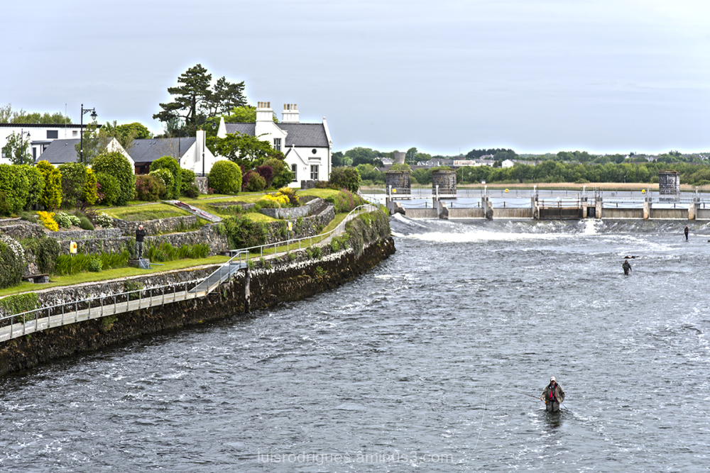 Galway Fishing in the River