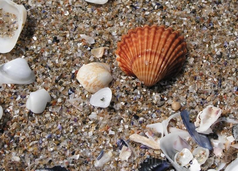 Ocean Shells from Spain