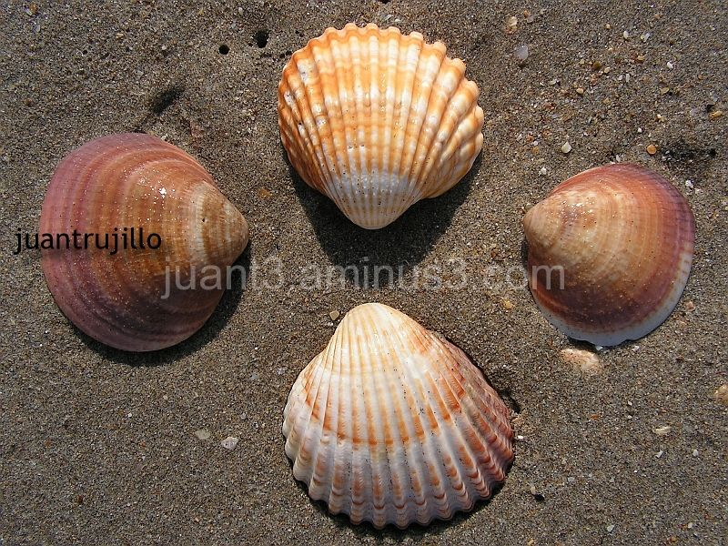 The meeting of Shells