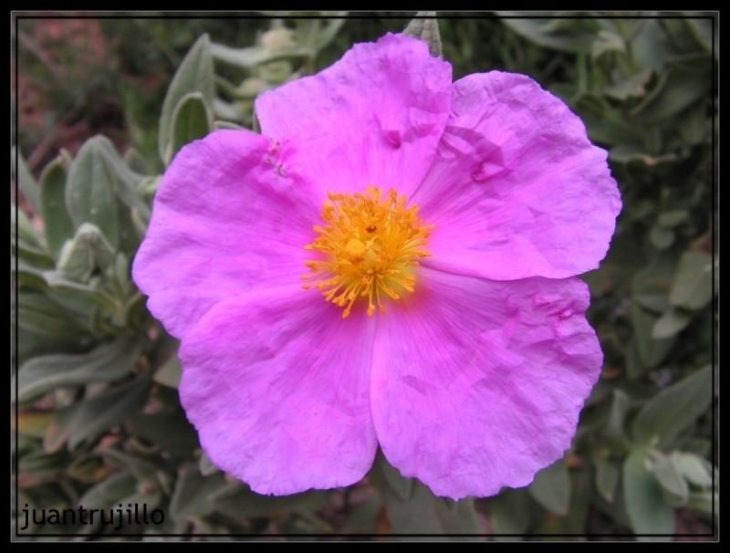 Paper flower...