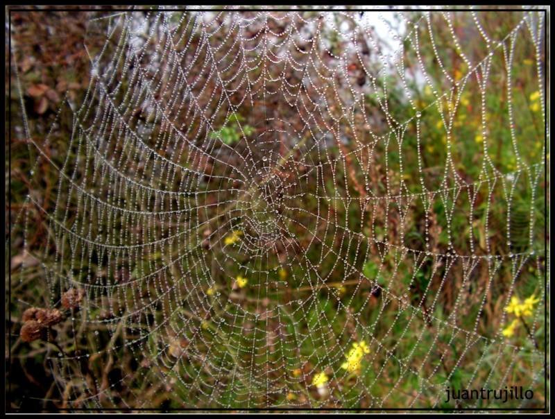 Wet Wild Web...