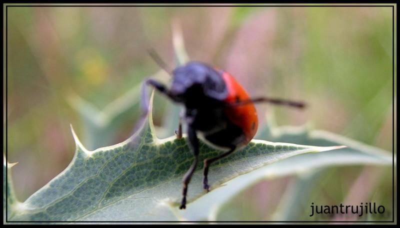 Bug Macro: Too Close...