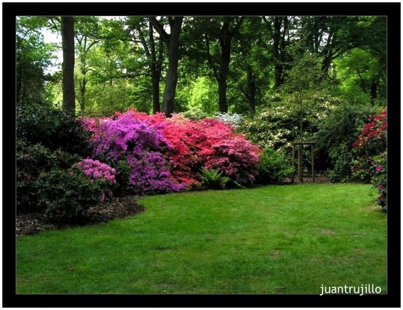 colors rhododendron park bremen iii plant nature. Black Bedroom Furniture Sets. Home Design Ideas