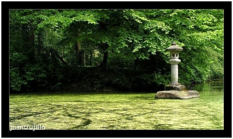Meditation - Rhododendron Park, Bremen (IV)