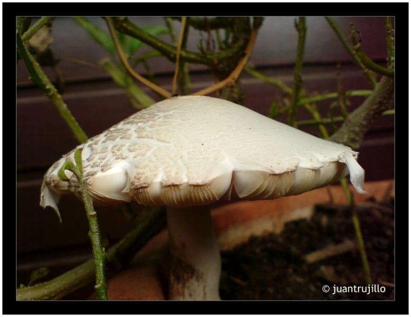 [Cyber-Shot] Mushroom in my pot...