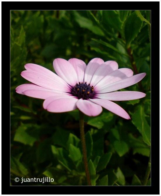 Favorite Flower [Cyber-Shot]