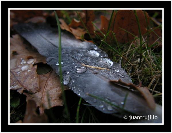 Drops... (II)