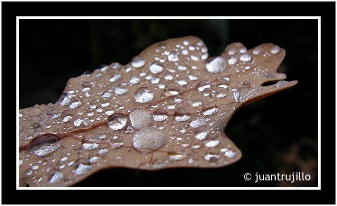 Drops... (V)
