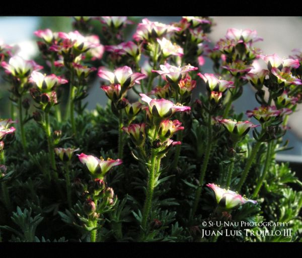 Stone Garden Flowers