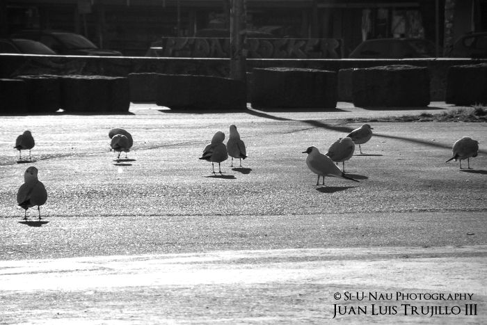 Early Birds...