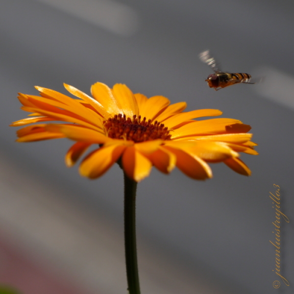 Hovering before landing...
