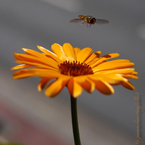 Hovering before landing... (2)