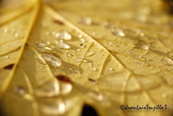 Autumn Colors: Drops on Leaf III