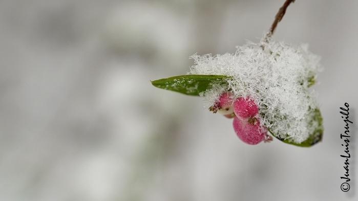 Simply Winter I