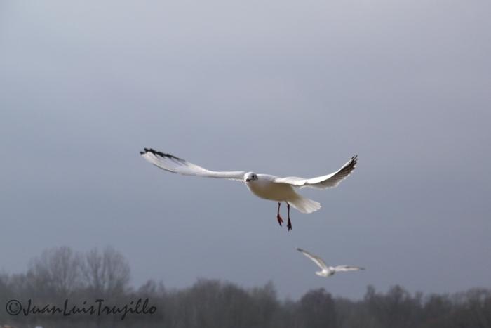 Flying Free...