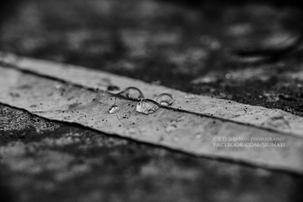 Grey Drops [2014-11-25]