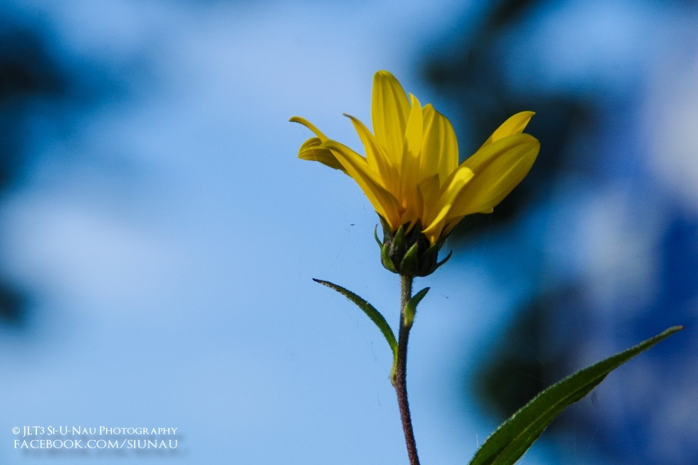 Yellow and Blue [2015-10-03]