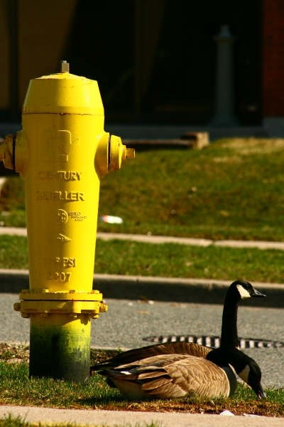 Relax by the hydrant